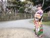 일본 매화향&벚꽃향 진동하는 소도시 낙원, 일본 이바라키