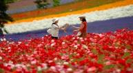지금 홋카이도는 여름 꽃  절정