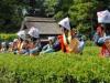일본적 감성의 정점에 서다. 오카야마 고라쿠엔