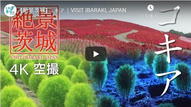 이바라키 랜선여행⑤-국영 히타치 해변공원