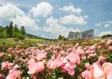 이바라키에서 즐기는 산벚꽃 명소 4선
