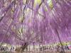 도부철도, 아시카가 플라워파크 할인 봄꽃순례티켓 판매